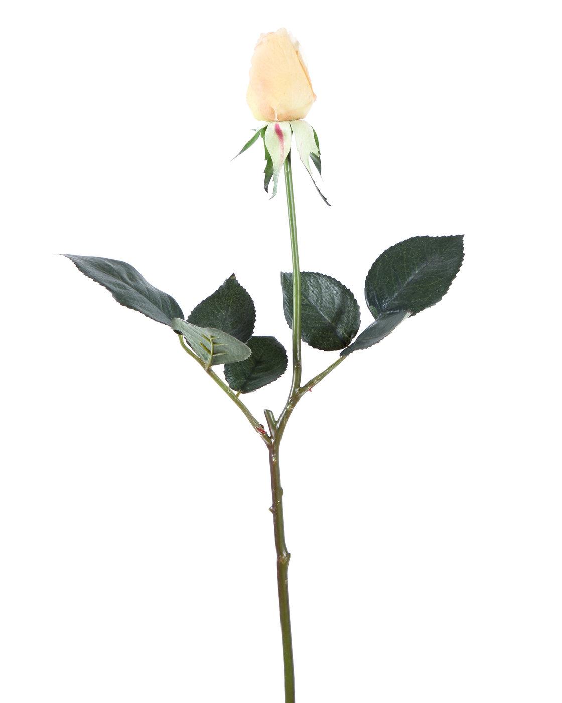 Diana de color rosa mini bot n natural rosas ingarden - Diana de colores ...