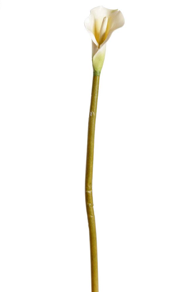 Ap2136